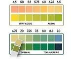 ph saliva test